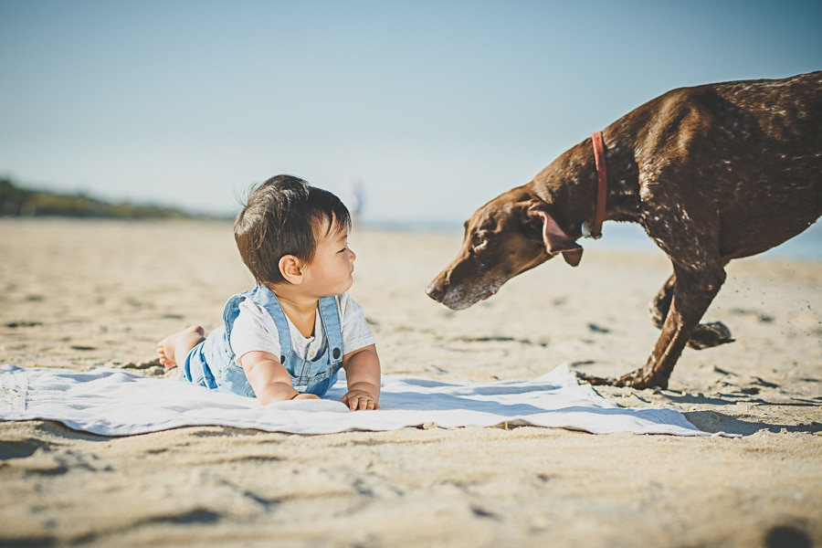 lifestyle photography melbourne beach dog boy